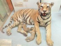 Milan Natural History Museum (5).jpg