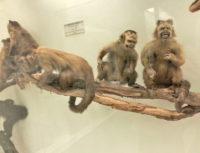 Milan Natural History Museum (6).jpg